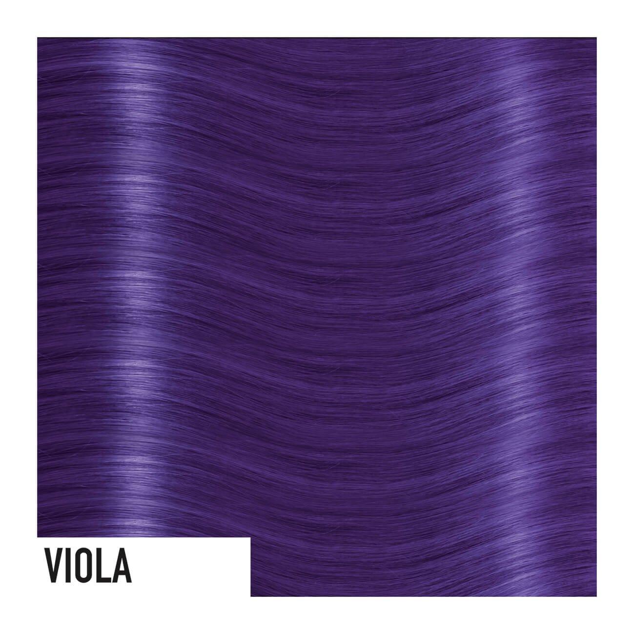 viola-copia